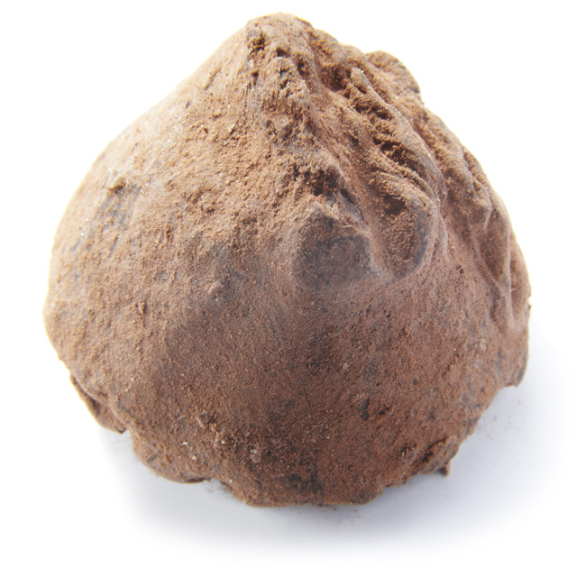 Rich Dark Truffle